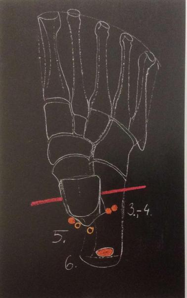 The axis and planes of movement in the foot